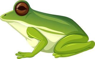 animal sapo verde em fundo branco vetor