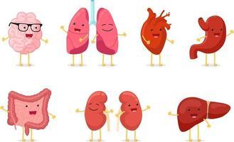 desenho bonito, anatomia humana saudável, órgão interno, conjunto de caracteres vetor