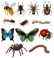 Conjunto de diferentes insetos selvagens vetor