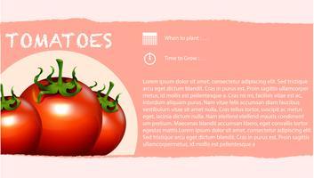 Infográfico e tomate fresco vetor