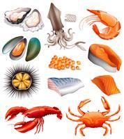 Conjunto de frutos do mar no fundo branco vetor