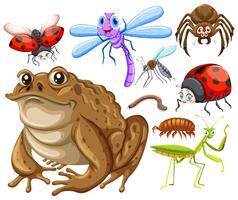 Tipo diferente de insetos vetor