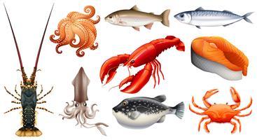 Diferentes tipos de frutos do mar vetor