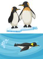 Pinguim nadando e em pé no gelo vetor