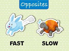 Palavras opostas para rápido e lento