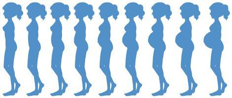 Nove meses de progressão na gravidez vetor