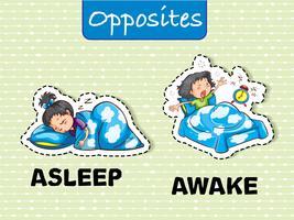 Palavras opostas para dormir e acordar vetor