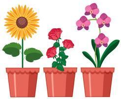 Um conjunto de flor em pote vetor
