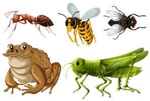 Conjunto de diferentes tipos de insetos