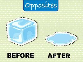 Palavras opostas para antes e depois vetor