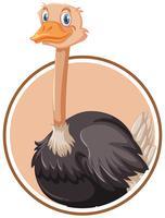 Um modelo de etiqueta de avestruz vetor