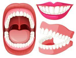 Conjunto de boca e dentes vetor