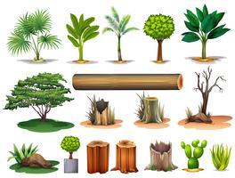 Árvores e tocos vetor