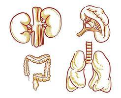 conjunto de ilustração de órgãos humanos para elemento de design vetor