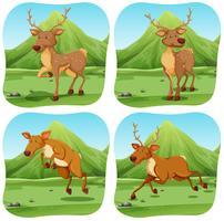 Deers em quatro cenas diferentes vetor