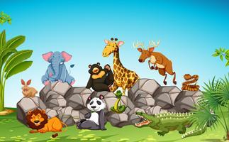 Animais selvagens sentados na rocha
