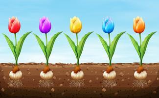 Tulipa de cor diferente no chão vetor