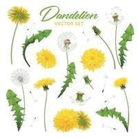 ilustração em vetor conjunto realista de flores dente de leão