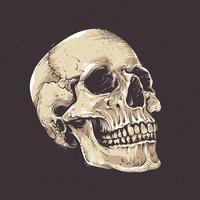 Crânio Anatômico Grunge