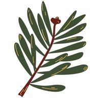 galho de abeto. galho de árvore verde. vetor