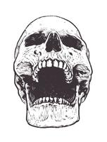 Vetor de crânio anatômico