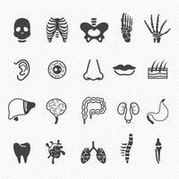 conjunto de ilustração de ícones de anatomia humana vetor
