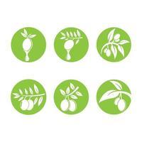 ilustração das imagens do logotipo da oliveira vetor