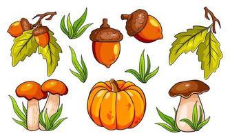 conjunto de outono. cogumelos, abóbora, bolotas, grama, folhas de carvalho. vetor