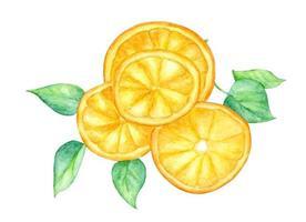fatia de fruta laranja e folhas verdes, ilustração de aquarela. vetor