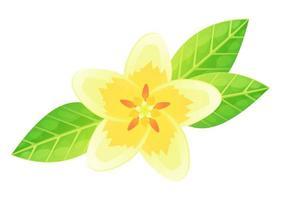 flor de plumeria exótica. bali ou havaí. branco com pétala amarela vetor