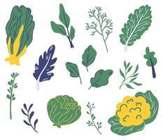 conjunto de salada verde. diferentes tipos de salada. vetor