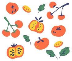 conjunto de tomates. diferentes tipos de tomate. vetor
