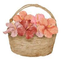 ilustração em aquarela de flor de hibisco em uma cesta vetor