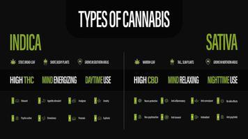 sativa vs indica, pôster preto de informações sobre os tipos de cannabis vetor