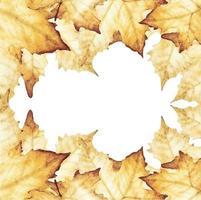 pintura em aquarela de folhas de plátano, com lugar para texto. vetor