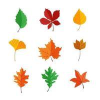 folha do pacote de ícones no outono vetor