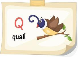 animal alfabeto letra q para codorna ilustração vetorial vetor