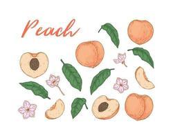 conjunto de frutas coloridas de pêssego, vetor