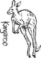canguru - desenho de ilustração vetorial desenhado à mão vetor