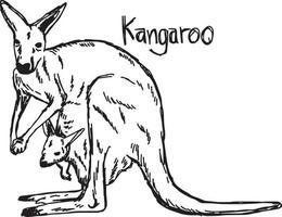 canguru com seu bebê no bolso - ilustração vetorial vetor