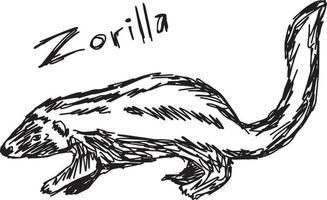 Zorilla - desenho de ilustração vetorial desenhado à mão vetor