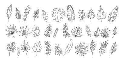 folhas exóticas definidas ilustração vetorial preto e branco vetor