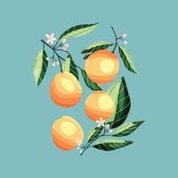 pêssegos e damascos em galhos de árvores. vetor