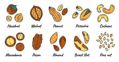nozes e sementes conjunto de ícones de diferentes tipos vetor