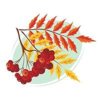 um ramo de rowan colorido. o conceito de outono. vetor