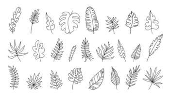 mão desenhado conjunto de folhas tropicais em silhuetas. vetor