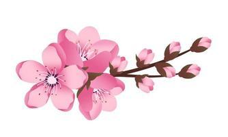 conjunto de ícones de flores de sakura fofas. os ramos de cerejeira floresceram. vetor