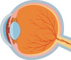 design da anatomia do olho vetor