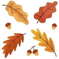 conjunto de carvalho botânico de outono, folhas e bolota vetor