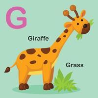 ilustração isolado animal alfabeto letra g, girafa vetor